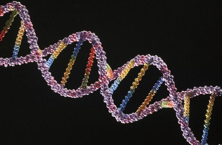 Photo of Ученые: в каждом человеке присутствуют 2 опасные мутации  Ученые: в каждом человеке присутствуют 2 опасные мутации Novosibirskomu uchenomu prisuzhd