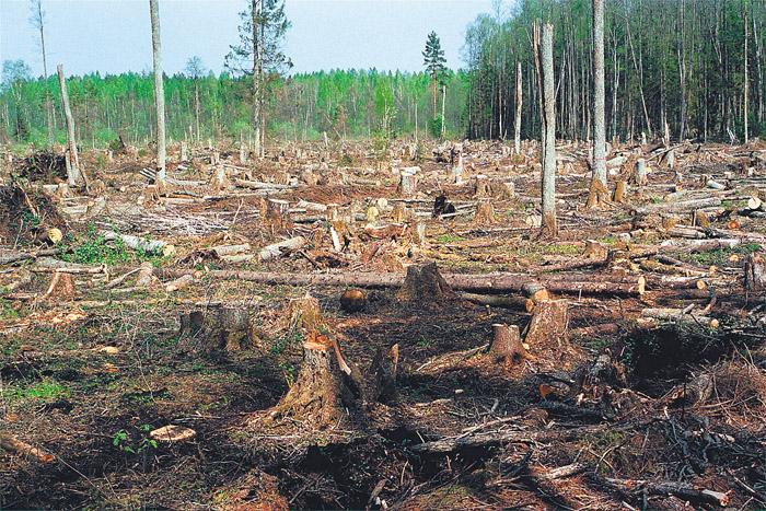 Photo of Россия возглавила список стран-лидеров по уничтожению леса  Россия возглавила список стран-лидеров по уничтожению леса vyrubka lesa