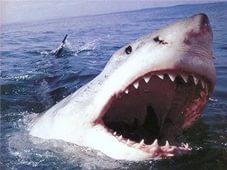 Photo of Стресс – причина нападения акул на людей Стресс - причина нападения акул на людей Стресс – причина нападения акул на людей i2