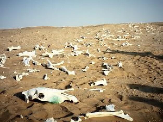 Photo of Ученые считают, что на Земле происходит массовое вымирание Ученые считают, что на Земле происходит массовое вымирание Ученые считают, что на Земле происходит массовое вымирание namib 3 2386637