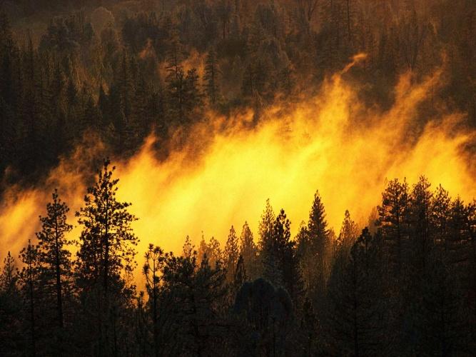 Photo of Московскую область атакуют пожары Московскую область атакуют пожары Московскую область атакуют пожары nature 121 crop