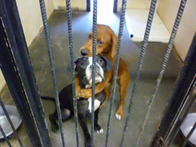 Photo of Публикация на Facebook  спасла собак от усыпления Публикация на Facebook  спасла собак от усыпления Публикация на Facebook  спасла собак от усыпления P9m2OraUvQQtPGlXemPpGg