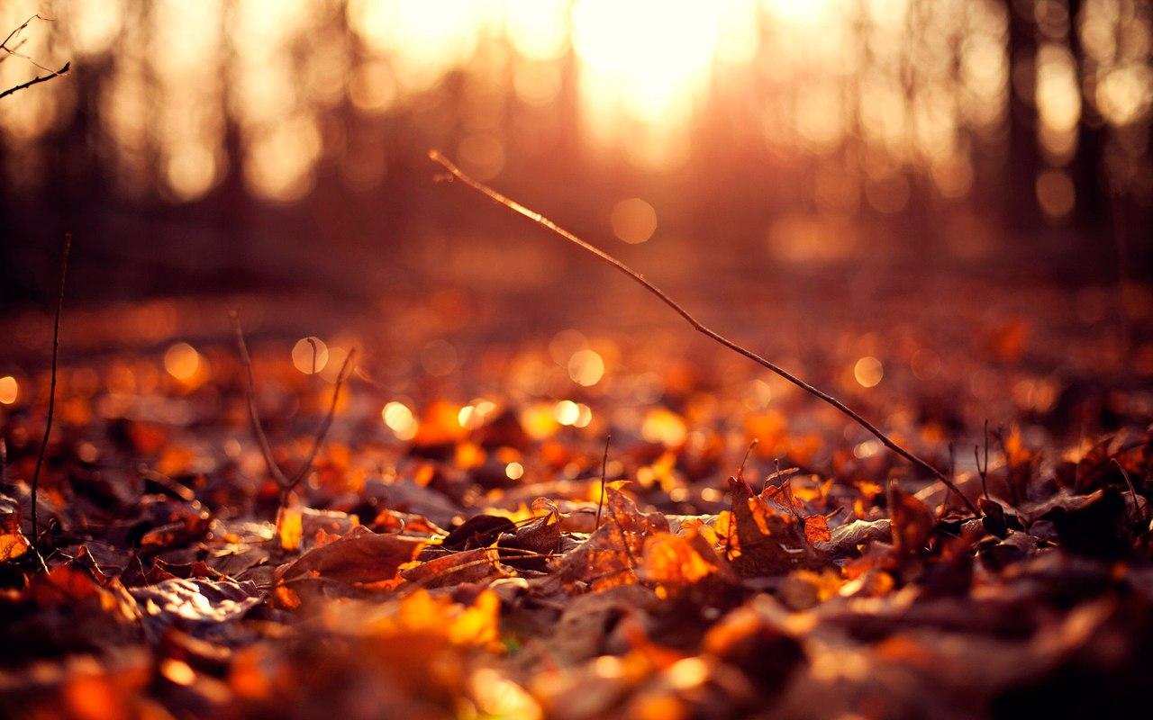 Photo of Как запечатлеть осень на пленку осень Как запечатлеть осень на пленку         1
