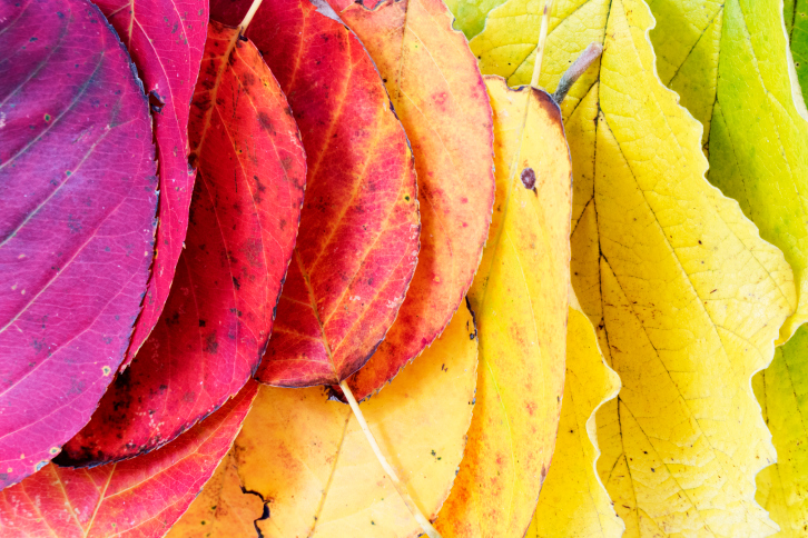 Photo of Главные события второй половины ноября Главные события второй половины ноября Главные события второй половины ноября