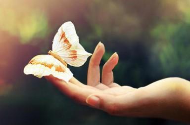 синдром бабочки