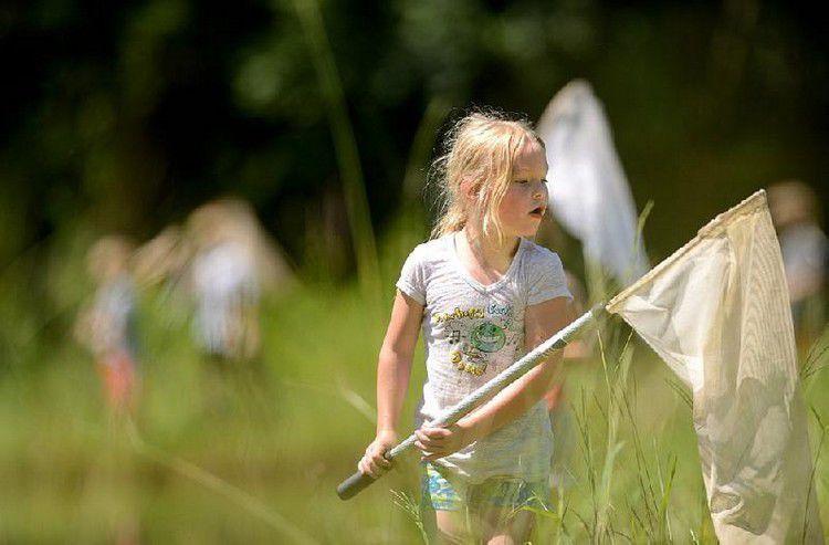 Ловить бабочек сочком note: 100 вещей, которые нужно сделать летом Note: 100 вещей, которые нужно сделать летом content 1448827521 b5a713a24e