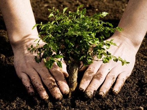 Посадить дерево note: 100 вещей, которые нужно сделать летом Note: 100 вещей, которые нужно сделать летом kak sajat derevia 0