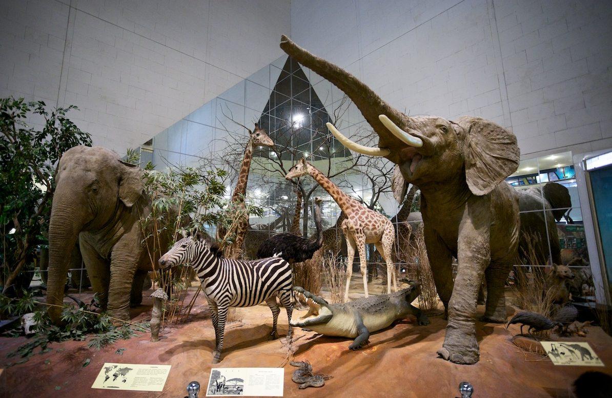 Дарвиновский музей день города бесплатные музеи Вход в московские музеи будет бесплатным на День города image1 e1473356547445