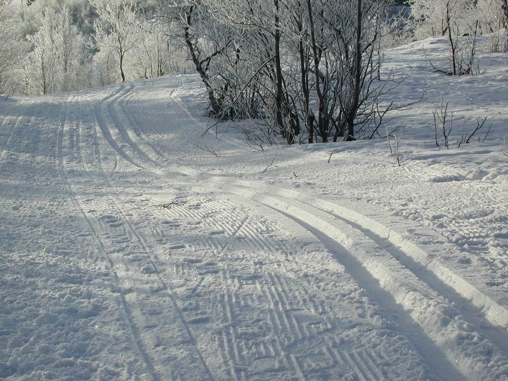 Photo of В парке Сокольники открылся прокат лыж сокольники В парке Сокольники открылся прокат лыж rDSCN2973