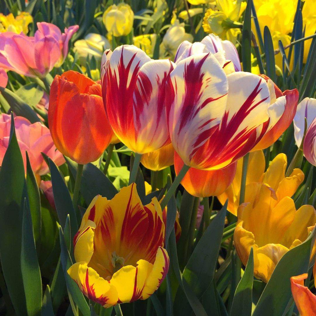 Photo of «Репетиция весны» в «Аптекарском огороде»  «Репетиция весны» в «Аптекарском огороде» 01 2