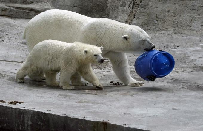 День белого медведя 02 4