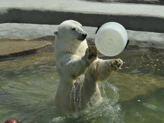 День белого медведя 03 4