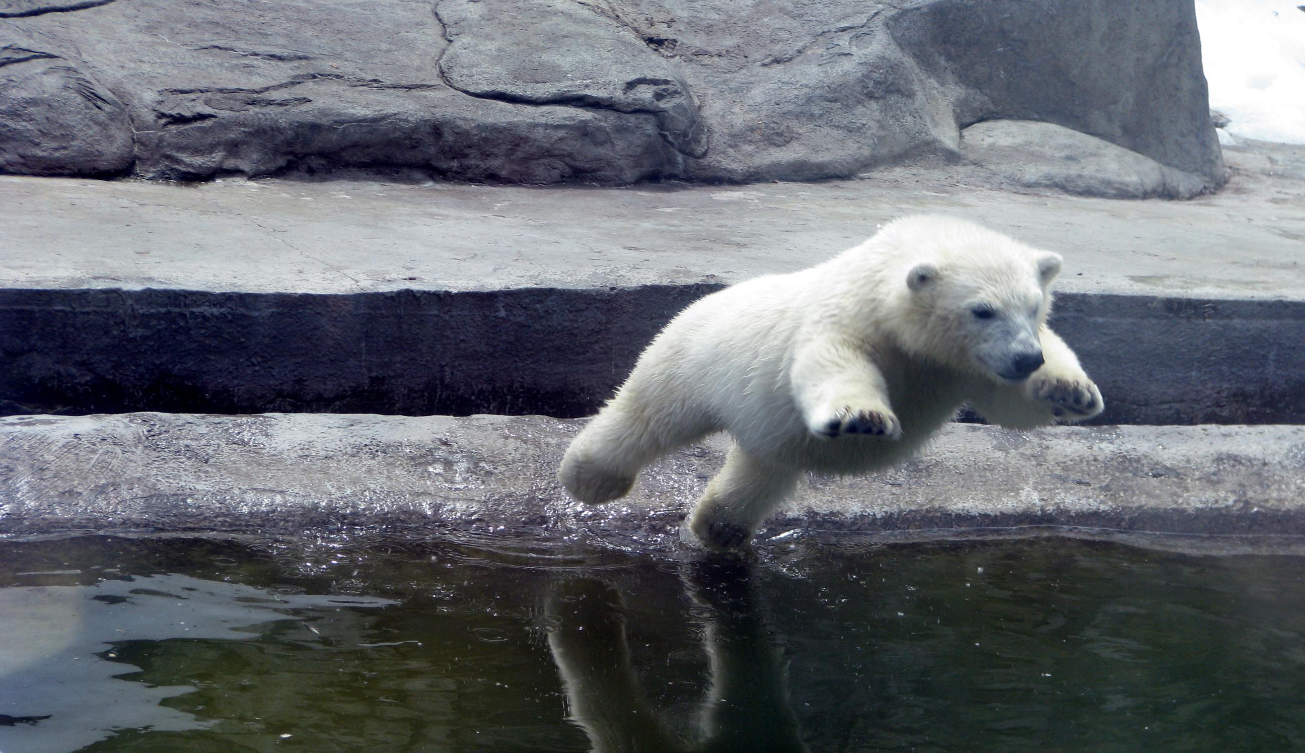 День белого медведя 05 3
