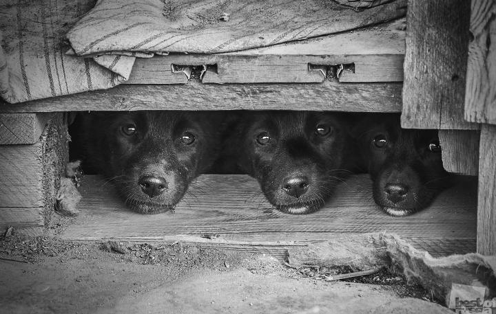 """Торжественное открытие выставки """"BEST OF RUSSIA: лучшие фотографы России"""" 720 13"""