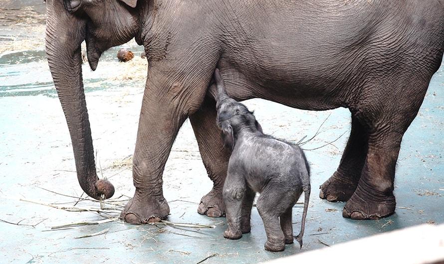 Photo of В Московском зоопарке родился слонёнок В Московском зоопарке родился слонёнок В Московском зоопарке родился слонёнок 01 6