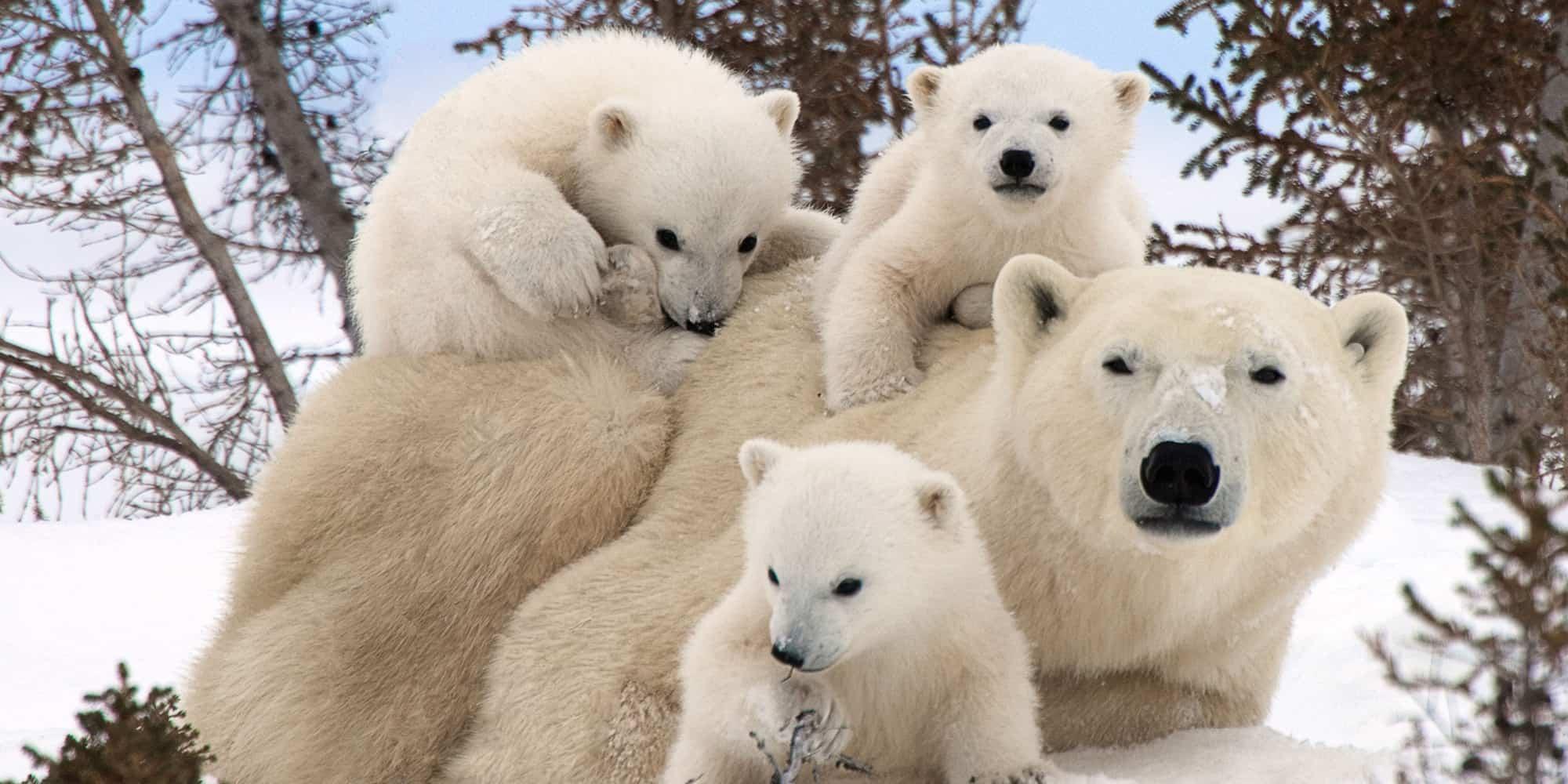 Photo of Селфи с моржом и белым медведем на ВДНХ Селфи с моржом и белым медведем на ВДНХ Селфи с моржом и белым медведем на ВДНХ 001