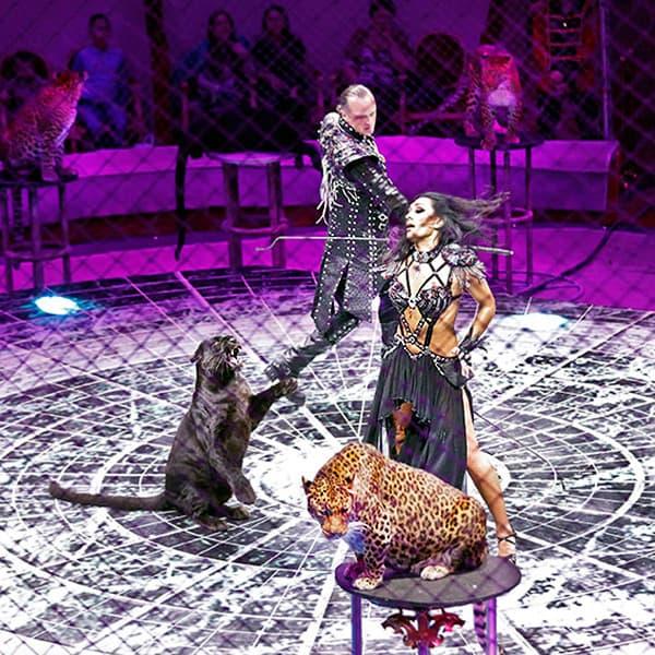 Фестиваль циркового искусства «Идол» Фестиваль циркового искусства «Идол» 2 17