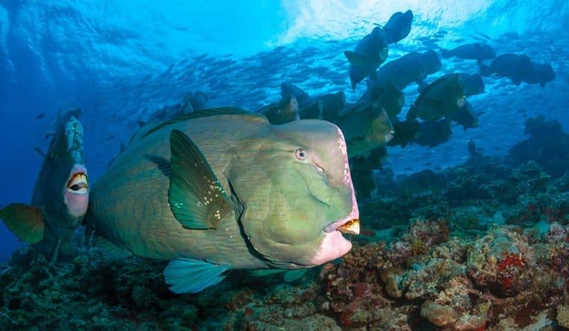 Фестиваль фотографии «Дикий подводный мир» Фестиваль фотографии «Дикий подводный мир» 4 2