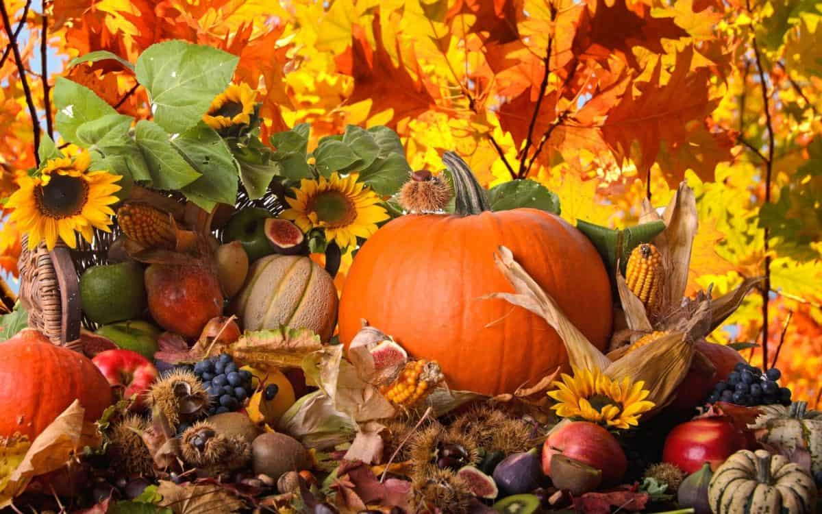 """Photo of """"Краски осени"""" – цветы, урожай и искусство """"Краски осени"""" - цветы, урожай и искусство """"Краски осени"""" – цветы, урожай и искусство 1"""