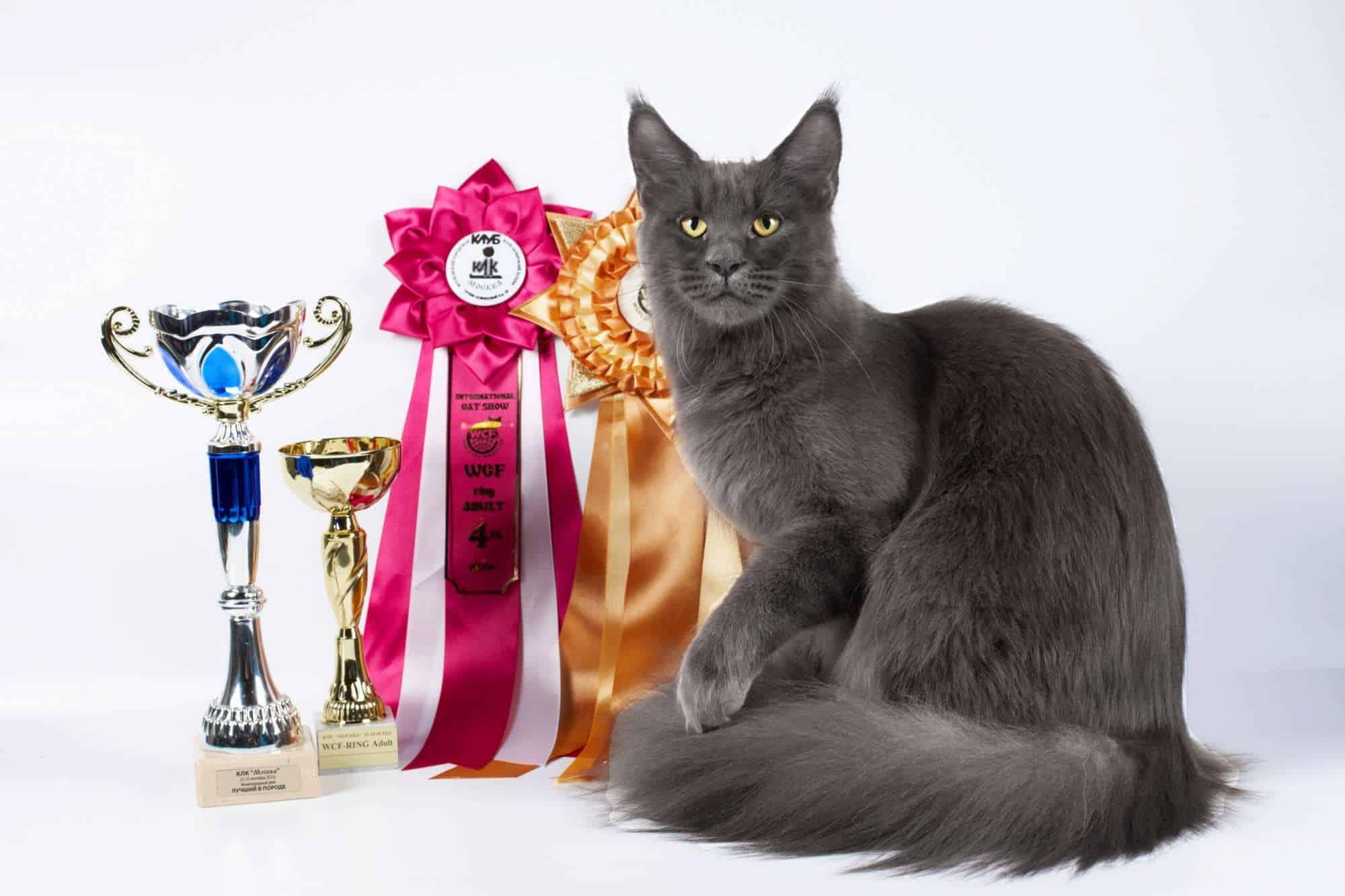 Кошарики Шоу Выставка-продажа котят «Кошарики Шоу» 3 3