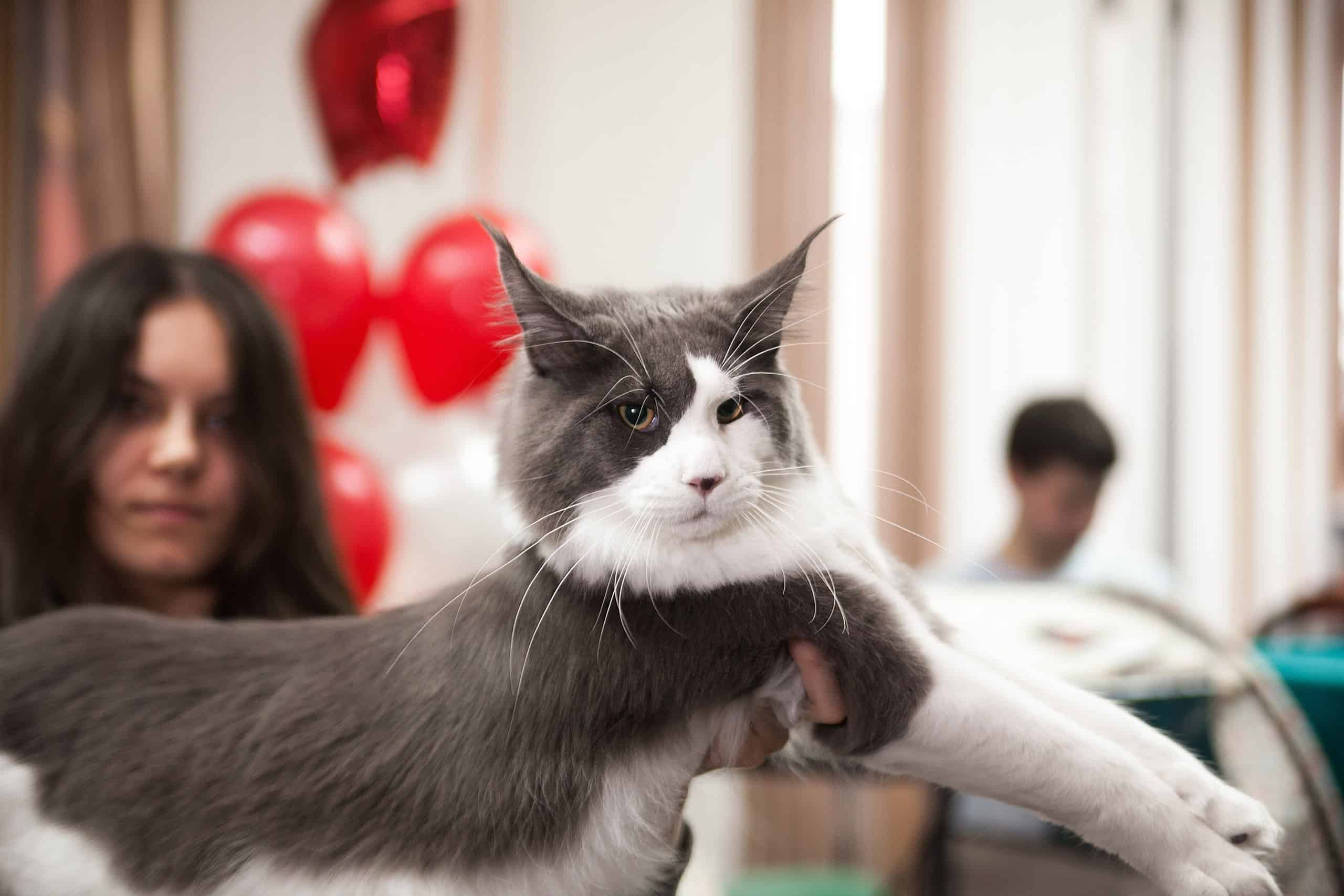 Кошарики Шоу Выставка-продажа котят «Кошарики Шоу» 4 3