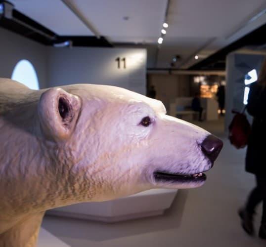 Путешествие в Арктику Путешествие в Арктику 5 1