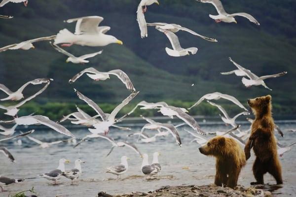 Фестиваль дикой природы «Золотая Черепаха» Фестиваль дикой природы «Золотая Черепаха» 5 7