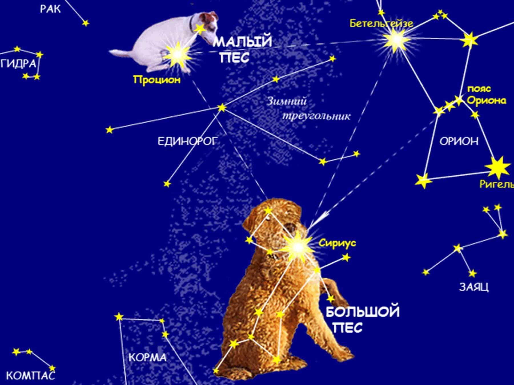 Зоология созвездий 4 6