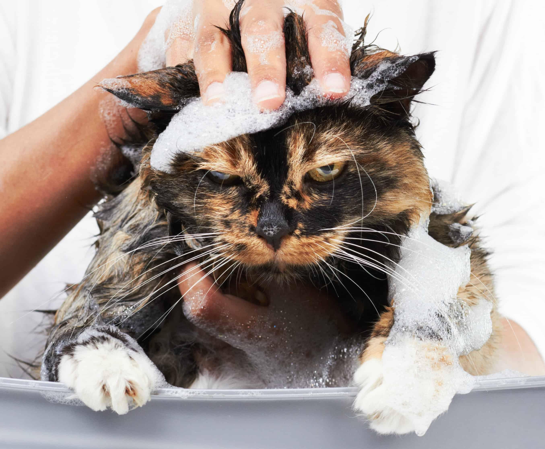 Photo of Не мылом единым Не мылом единым Не мылом единым 1 5
