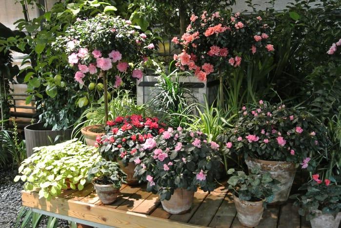 Фестиваль орхидей Фестиваль орхидей 3 12