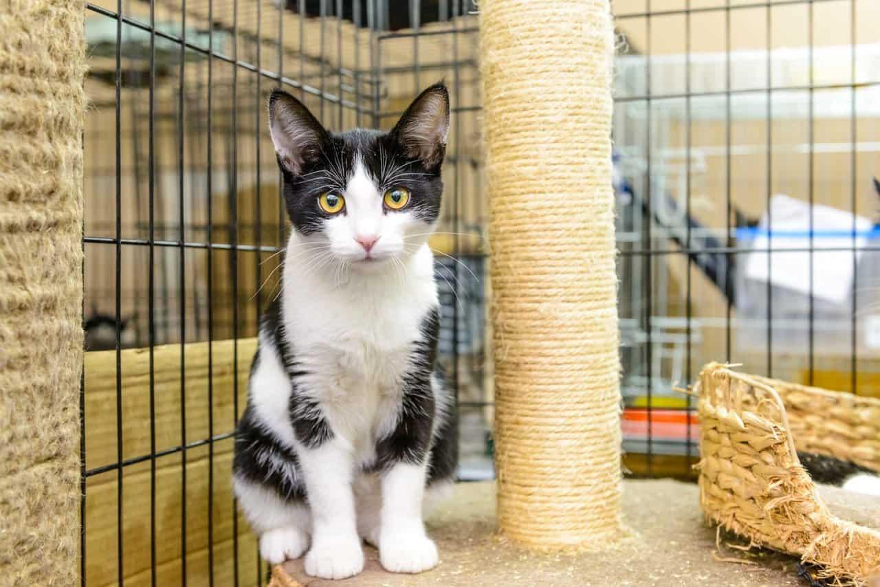 Выставка кошек «Неслучайная встреча» Выставка кошек «Неслучайная встреча» 3 13