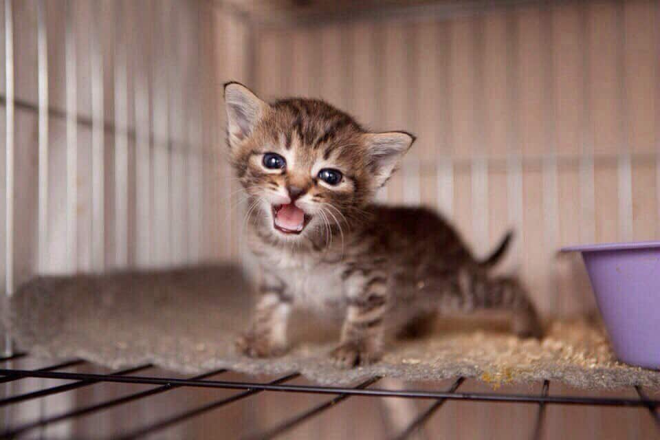 Выставка кошек «Неслучайная встреча» Выставка кошек «Неслучайная встреча» 4 13