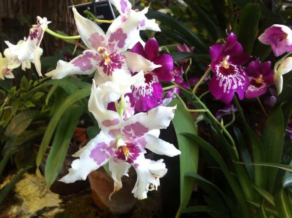 Фестиваль орхидей Фестиваль орхидей 5 10
