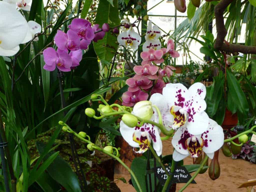 Фестиваль орхидей Фестиваль орхидей 6 7