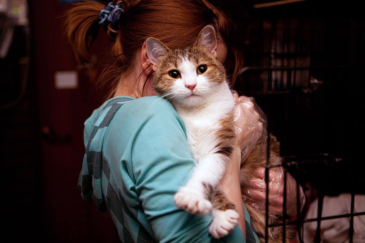 Выставка кошек «Неслучайная встреча» Выставка кошек «Неслучайная встреча» 6 8