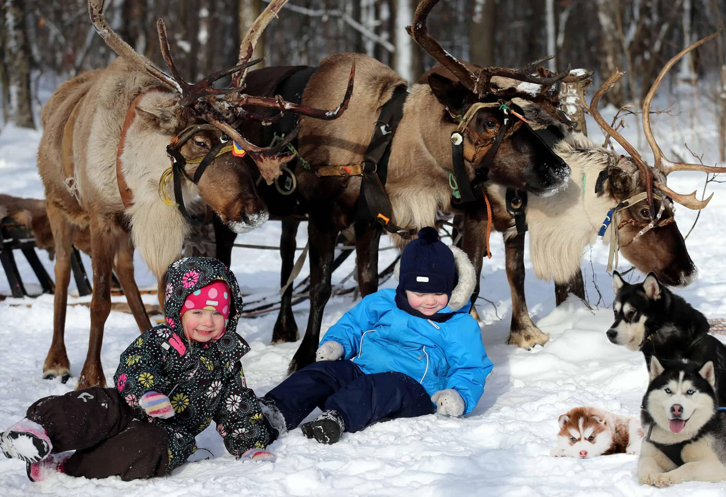Катание на упряжках в московских парках Катание на упряжках в московских парках 8