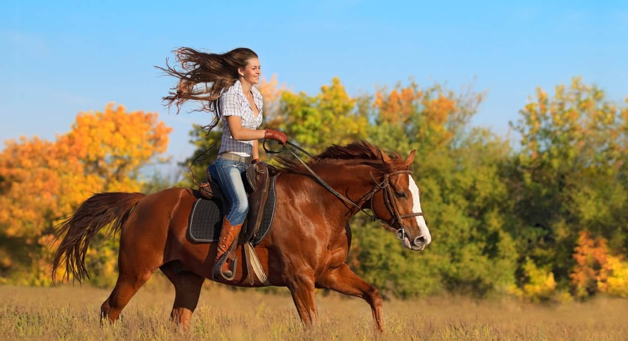 Photo of Где покататься на лошадях в Москве? где покататься на лошадях в Москве Где покататься на лошадях в Москве? 11