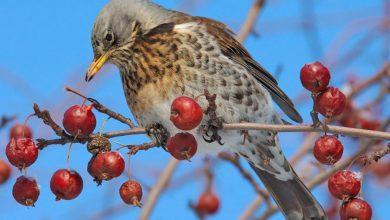 Photo of Международный день птиц Международный день птиц Международный день птиц 1 27 390x220