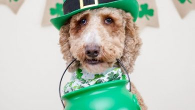 Photo of IRISH WEEK irish week IRISH WEEK E326iLgRMo 390x220
