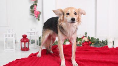 Photo of Фотография помогает собакам найти дом taily photo Фотография помогает собакам найти дом IMG 9206 390x220