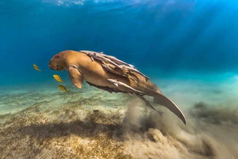 Дарвиновский музей IV Фестиваль подводной фотографии «Дикий подводный мир» Бесплатное воскресенье в музеях: топ 7 выставок, на которые стоит успеть Бесплатное воскресенье в музеях: топ 7 выставок, на которые стоит успеть
