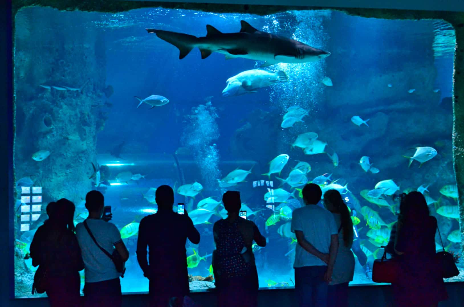 акцентируется сложном аквариум на вднх картинки должен быть вкусным