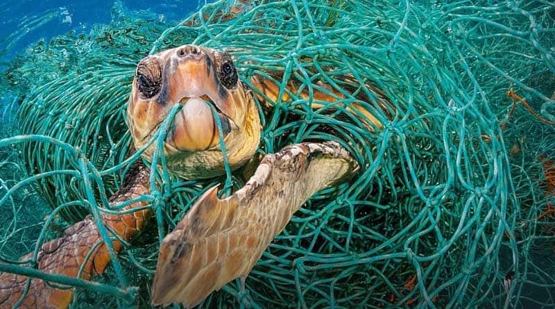 Фото из общедоступных источников экология Вы готовы к осознанному потреблению?