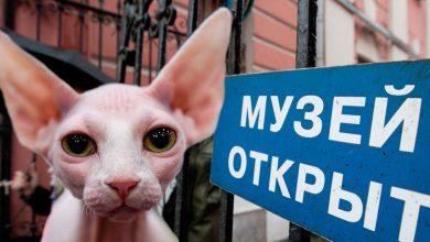 Photo of Самые необычные музеи Москвы музей Самые необычные музеи Москвы 93f1771d78f3c17457b7186e5dd2f838  980x 390x220