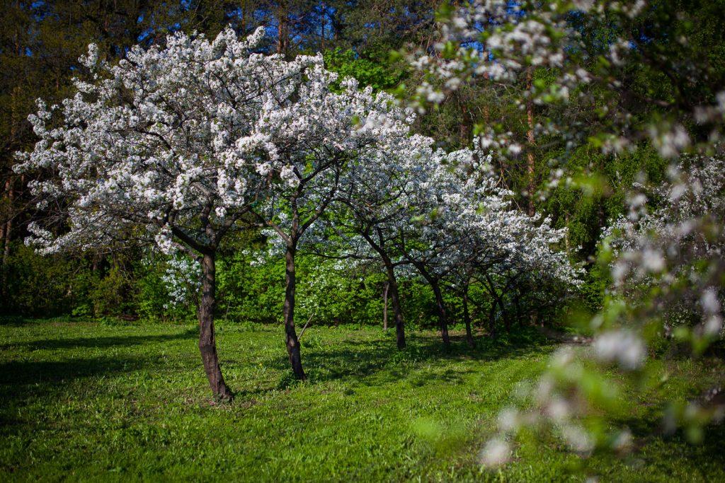 Мичуринский сад Мичуринский сад Мичуринский сад ВДНХ 01 1024x683
