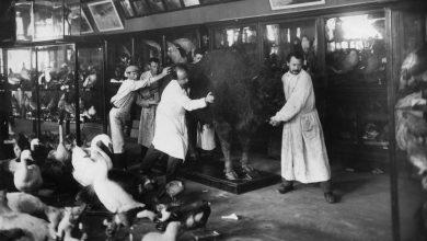 Photo of День Победы: как московские музеи работали в тылу и на фронте музеи в тылу День Победы: как московские музеи работали в тылу и на фронте