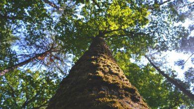 Photo of В Москве теперь можно посадить именное дерево Наше дерево В Москве теперь можно посадить именное дерево                       390x220