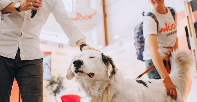 Photo of О кошках, собаках, приютах и благотворительности. Интервью с организаторами фестиваля Woof Fest woof fest О кошках, собаках, приютах и благотворительности. Интервью с организаторами фестиваля Woof Fest YJ7lzTsAr 4 780x405