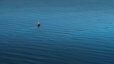 Photo of Лучшие места для пляжного отдыха в пределах Подмосковья пляжный отдых в подмосковье Лучшие места для пляжного отдыха в пределах Подмосковья lake mo 390x220