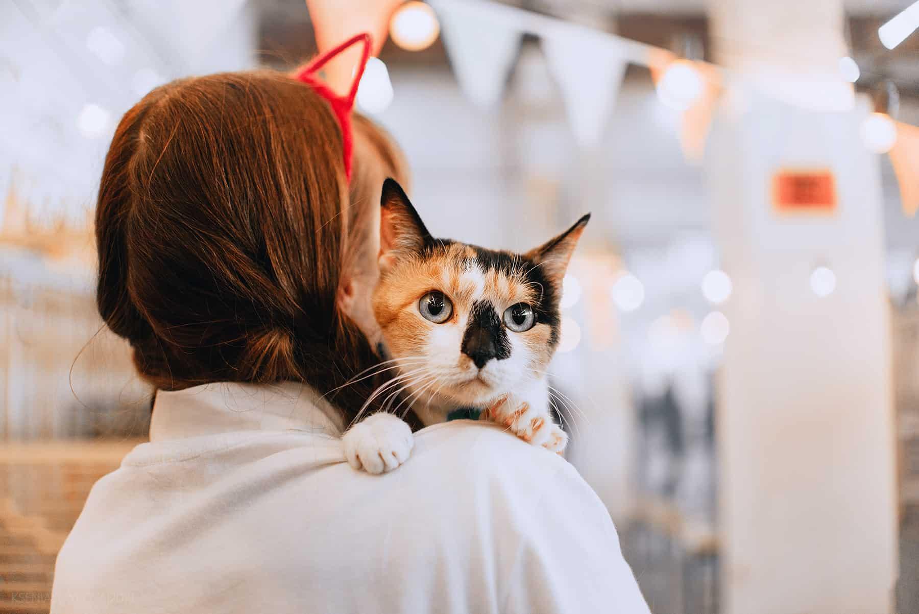 woof fest О кошках, собаках, приютах и благотворительности. Интервью с организаторами фестиваля Woof Fest ufr8gMnjivo 2